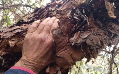 Diario de un botánico enamorado: Parque Tunari
