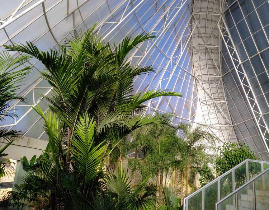 Diario de un botánico enamorado: Invernadero Tropical